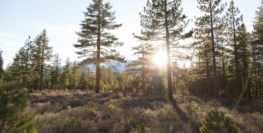 Wildlife Safety for Wilderness Professionals