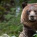 Bear Spray & Banger Safety