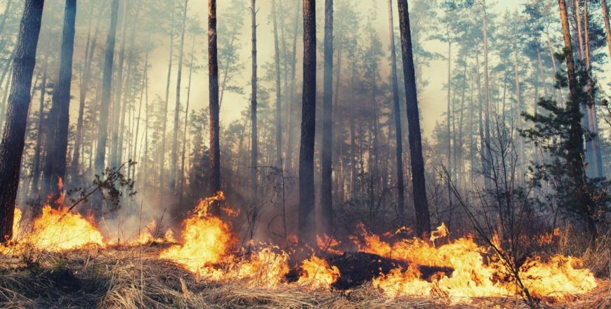 Forest Fire Fighting Safety Basics